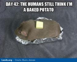 Guinea Pig Puns/Jokes! | The Guinea Pig Forum