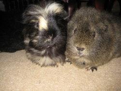 Betsy & Velvet.JPG