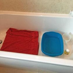 Bathing-2 setup_edited-1.jpg