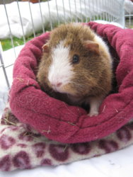 Dennis in snuggle sack 2.JPG