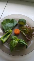 Guinea pig meal.jpg