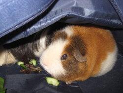 Piggy Napping 5.JPG