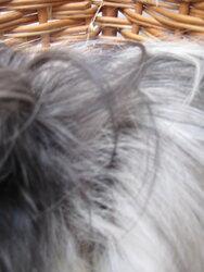 Betsy hair loss 1.JPG