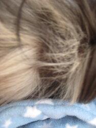 Betsy hair loss 3.JPG