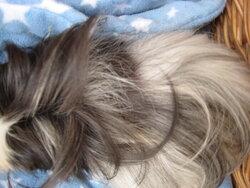 Betsy hair loss 4.JPG