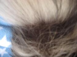 Betsy Hair loss 5.JPG