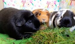 Dexy, Ebony and Amber (3).jpg