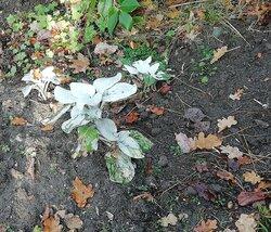Velvet's Plant.jpg