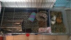revised cage.jpg