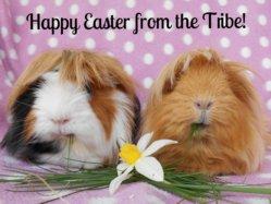 Tegan & Tesni Easter 2015.jpg