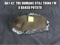 pig potato.jpg