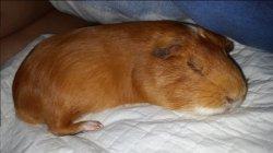 George asleep.jpg