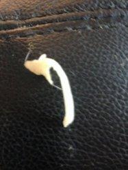 Monty's sperm rod.jpg
