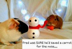 17 Bert is King   Fred and George.jpg