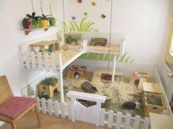 diy-guinea-pig-cage-ideas.jpg